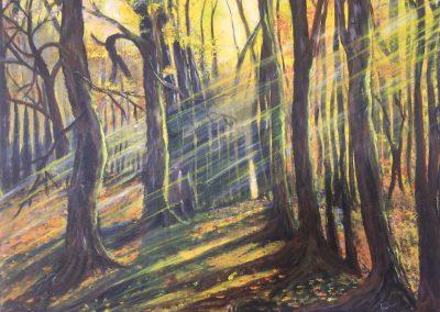 Sous bois ensoleillé DURAND Maurice